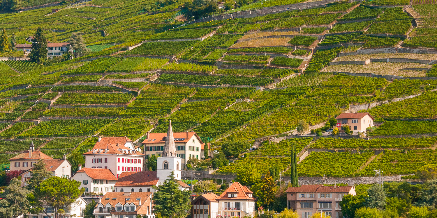Lavaux Weinberge