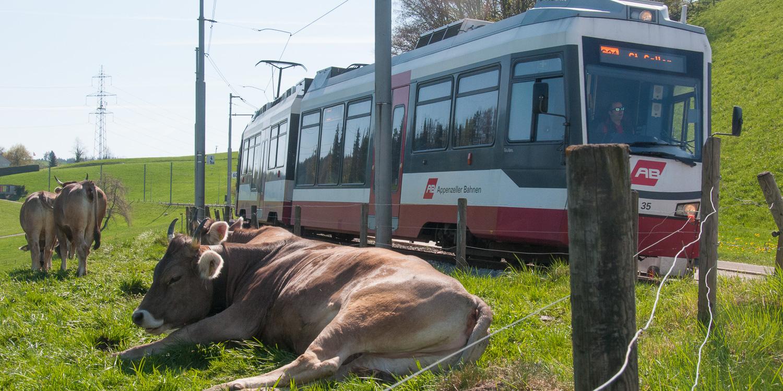 Trogenbahn Radtour